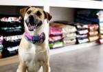 Animale Pet Shop